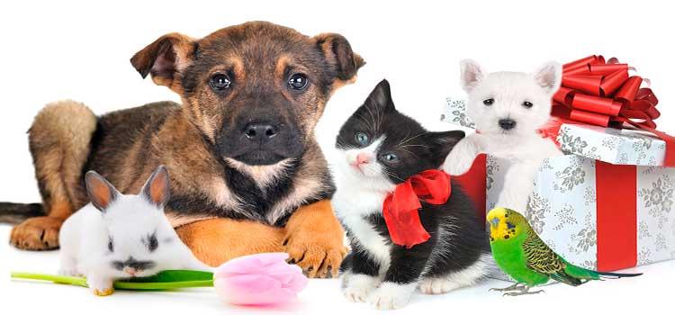 ideas-regalos-san-valentin-fondo-mascotas perro, gato, conejo y periquitos