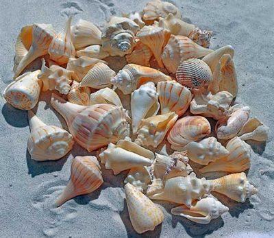caracolas--blancas-en-la-playa-