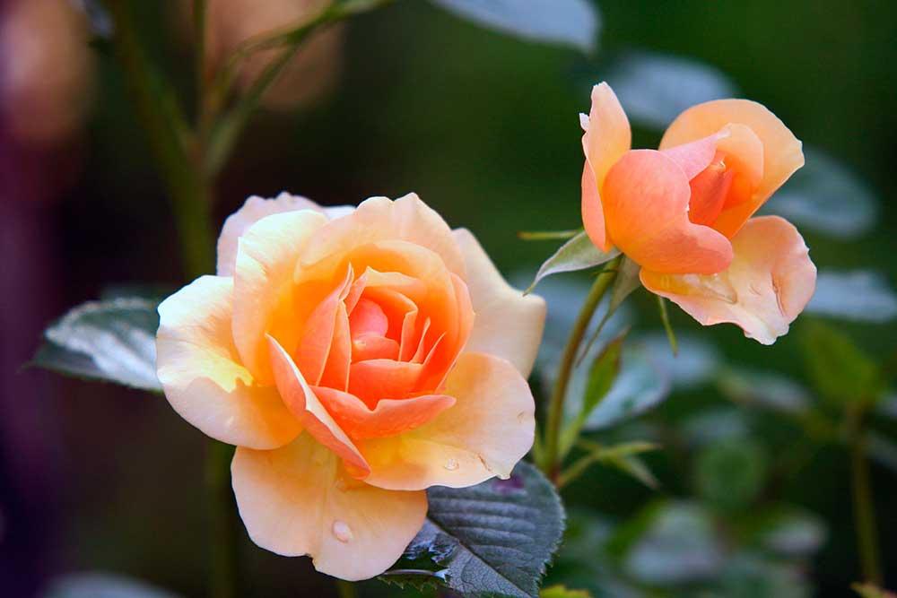 Tips belleza naturales