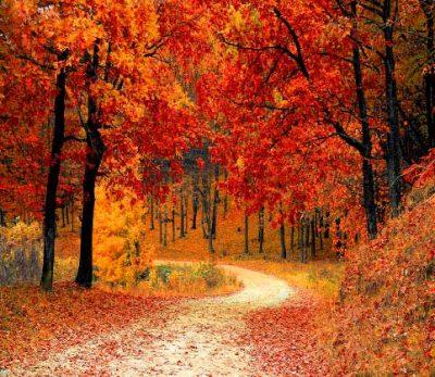 octubre,-hojas-secas,-arboles-cayendo-hojas