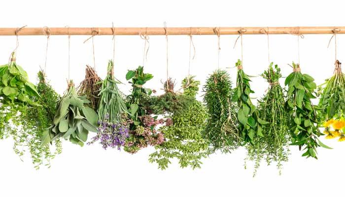 remedios-caseros-dolor-de-cabeza-hierbas-medicinales,-hierbas-para-infusiones