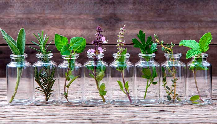 sol, plantas, vacaciones, tips, Tarros-de-cristal-con-esquejes-de-plantas