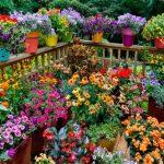 Tips para tus plantas después de vacaciones