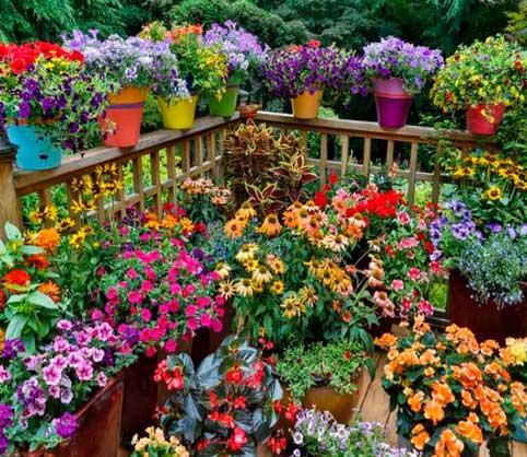 sol, plantas, vacaciones, tips, terraza llena de plantas con flores