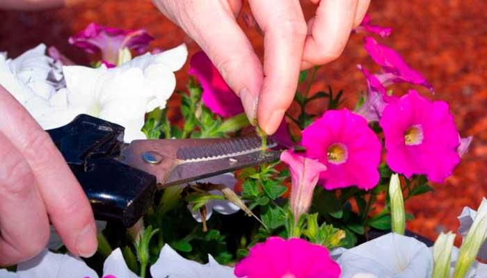 sol, plantas, vacaciones, tips, cortar-flores-secas-con-tijeras