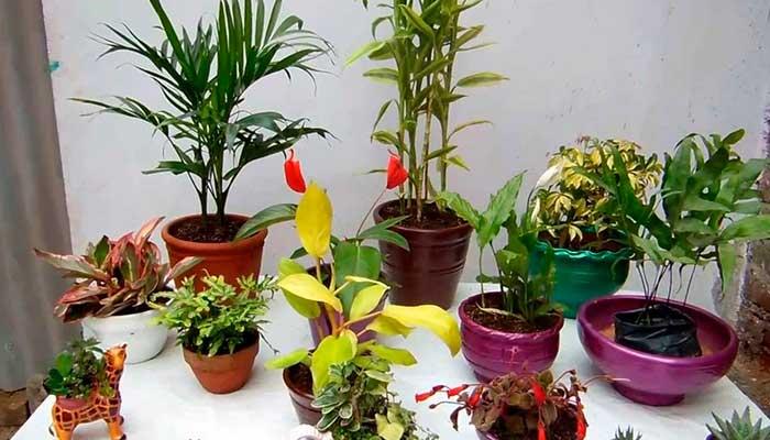 sol, plantas, vacaciones, tips, macetas-con-plantas