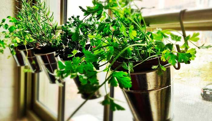 sol, plantas, vacaciones, tips, plantas-aromaticas-cocinar