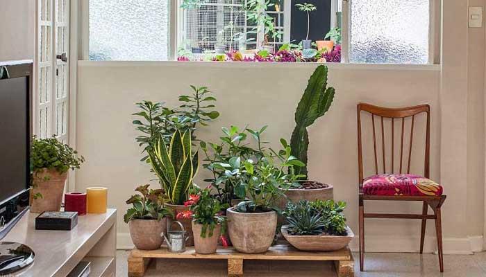sol, plantas, vacaciones, tips, plantas-dentro-de-una-terraza