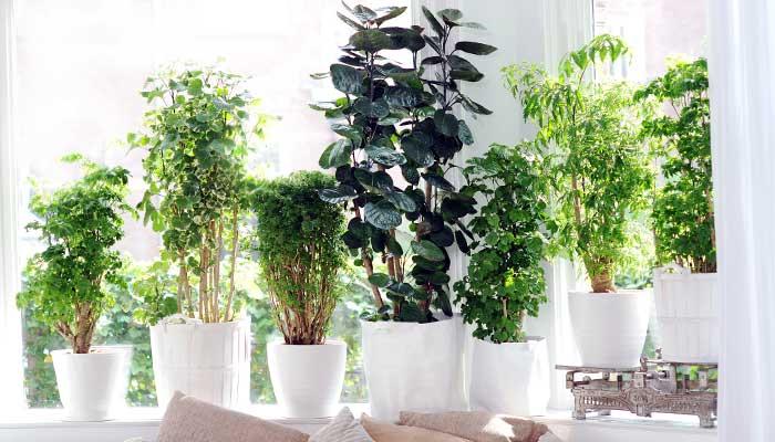 sol, plantas, vacaciones, tips, plantas-en-repisa-ventana