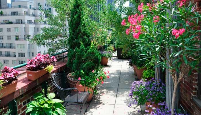 sol, plantas, vacaciones, tips, terraza-llena-de-plantas