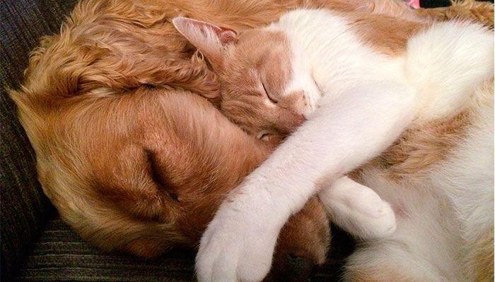Vicks-VapoRub,-mascotas,-perros-y-gatos