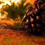 Navidad: 7 plantas típicas