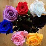 ¿El mejor regalo? Una rosa eterna