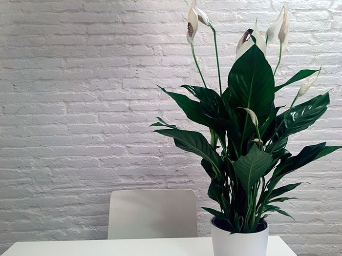las mejores plantas para tu casa