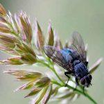 Cómo hacer trampas y repelentes de insectos.