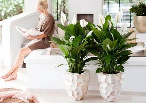 Humidificadores aromáticos para plantas